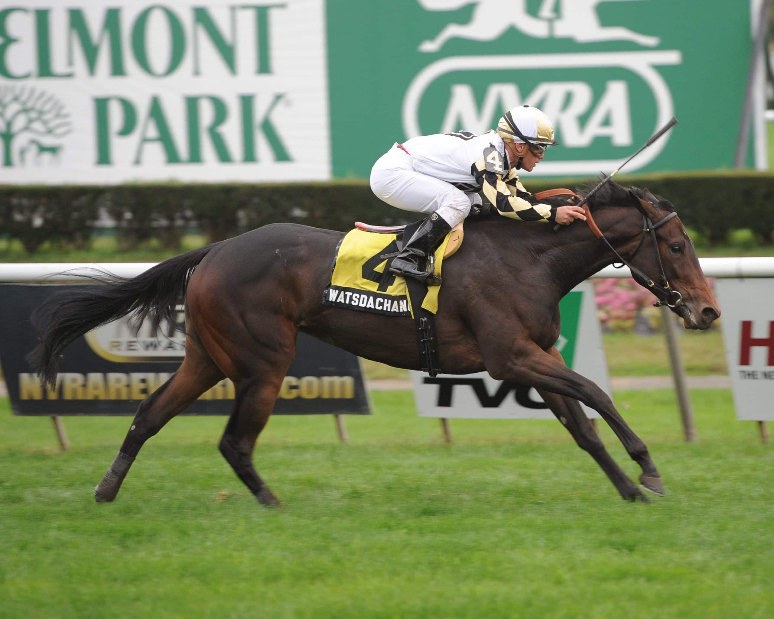 Watsdachances winning the G3 Miss Grillo at Belmont