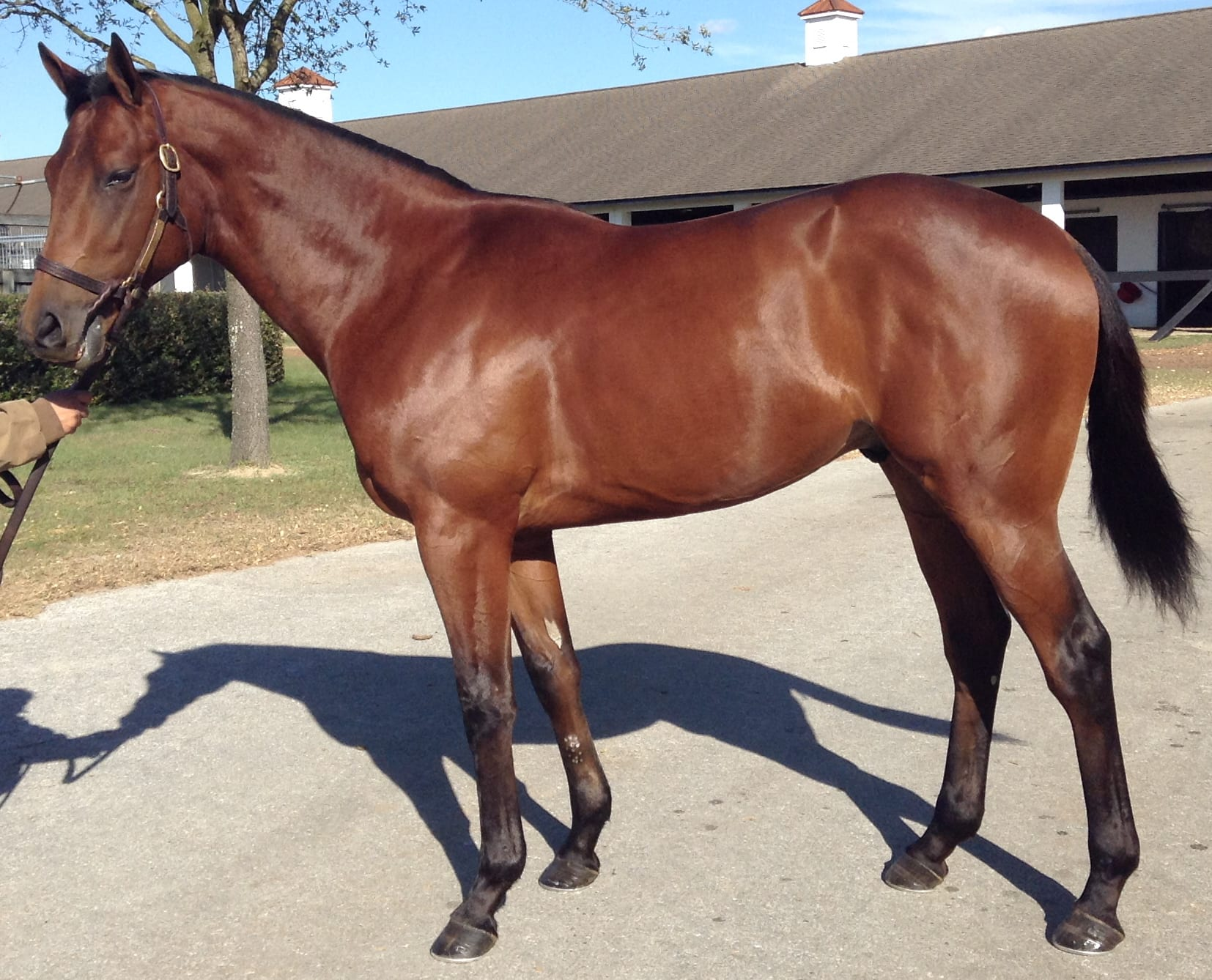 Dukin' With Dale as a yearling.